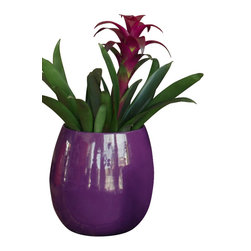 Spun Steel Planters, Small Taper - Lightweight and supremely colorful, these steel planters are a perfect cachepot for a houseplant or foundation for a succulent arrangement. Eggplant purple.