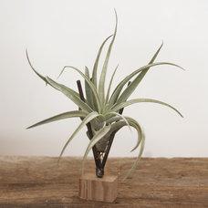 Modern Plants by Flora Grubb Gardens