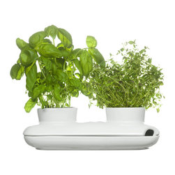 Duo Herb Pot - Create a lush indoor garden with elegant design. The Duo ceramic herb pot is perfect for two medium-sized plants and includes a side opening to easily fill the design's reservoir. Water stored in the reservoir will nurture the plants, so you save time!
