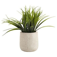 Traditional Plants by Pier 1 Imports