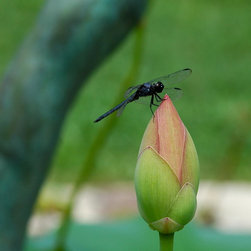 Roweboat Art Inc - Dragonfly On Bud III, Eco-Imagery Photography, 14X14 - Photograph created by Robin Rowe
