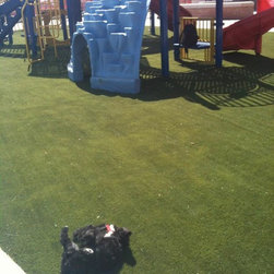 SYNLawn Playground Surfaces - This puppy loves SYNLawn, synthetic lawns!