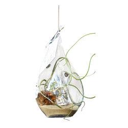 Air Plant Company - Baige Airplant Terrarium - Baige Airplant Terrarium Glass Terrarium