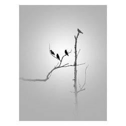 Birds In Grey Flannel, Limited Edition, Photograph - Title: Birds in Grey Flannel.  Image size: 10 x 13 / print only / limited edition  Printed with a border.  This is a black and white archival pigment print made on Canson Baryta Photographique Paper, a museum quality paper with a satin finish.  Comes signed, dated and numbered on the back.  Ships flat and is carefully packaged for safe delivery.