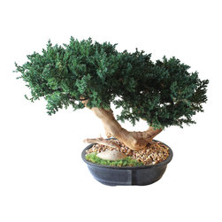 Double Bonsai Sandblasted - Get your daily dose of design inspiration.  Beautiful sandblasted grape wood and preserved juniper green mound together create the classic design of a bonsai that looks like it has been manicured and grown for years. Each tree is uniquely designed.
