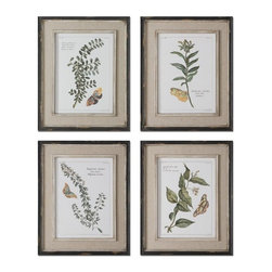 Grace Feyock - Grace Feyock Butterfly Plants Traditional Wall Art X-97015 - Prints are accents by heavily distressed, black outer wooden frames with heavily textured, off-white inner lips with a heavy taupe wash. Center portion of frames are covered in a sand faux linen.