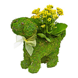 "luludi living frames - Luludi Living Frames Emerald Pup - Our emerald moss puppy planter comes with a colorful display of pre-planted kalanchoes or violets with moss and a decorative bow. Made of lush woven moss, this green living frame pup makes a wonderfully unique pet lover and housewarming gift, puppy planter comes pre-filled with kalanchoes or violets (may be custom filled upon request):, medium, dimensions: 12"" length x 12"" height x 6"" depth, weight (approx): 10 oz, want to create your own puppy display?, visit our plants section to custom fill your purse with a different plant of your choice, contact us at 1. 888. 9. Luludi or info@luludi. Net, Suggestion for care:, moss, moss puppy outside mist once per week to maintain lush green color, moss inside planter requires no care unless it becomes dry and brittle then remove moss and mist, allow to dry before replacing in planter, african violets, african violets thrive in moderate to bright, indirect, indoor light 8 to 12 hours per day (direct sunlight can burn leaves unless it is very early or very late in the day), african violets require at least 8 hours of darkness, each day, in order to bloom, in general, african violets need just enough water to keep the soil moist, but never soggy, keep soil moist to dry, and allow soil around roots to dry out before watering to encourage blooming, use room temperature water, or as close as possible when water is too cold, it chills the plant""s roots, avoid getting water on leaves to avioid spotting damage only exception is spray misting for purposes of quick-feeding or increasing humidity around plant. (misting will not leave behind large water droplets which, when exposed to the sun, will produce brown spots on leaves. ), pinch off spent blossoms and blossom stems to encourage development of new blooms, place plant away from floor vents, fans, or entrance doors to avoid air drafts and bursts of cold air."