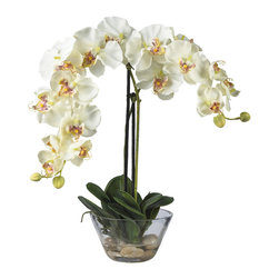 Nearly Natural - Nearly Natural Phalaenopsis w/Glass Vase Silk Flower Arrangement in White - Standing twenty inches high, this grand member of the orchid family is sure to make a spectacular impression. A mix of brightly hued petals graced by two delicate buds adds a simple yet elegant touch. Perfect for a dining room centerpiece, this attractive Phalaenopsis arrangement is adorned by lush green leaves. A delicate round glass vase adds the perfect finishing touch to this floral masterpiece.