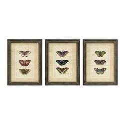 iMax - Butterfly Collection Wall Art, Set of 3 - Set of three framed colorful butterfly study prints.