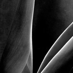 It's a Beautiful World! - Ben and Raisa Gertsberg, Agave, Fine Art Photography, Art Print - Agave - from Black And White series.