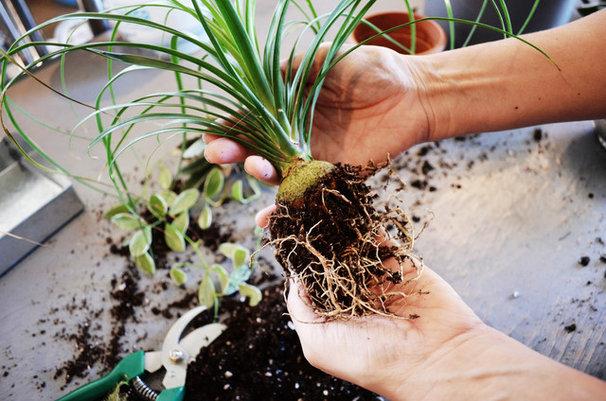 DIY : Créez votre jardin suspendu avec les « kokedama »