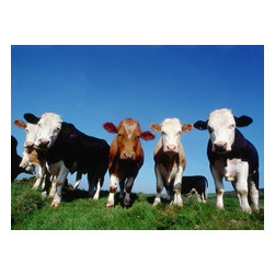 Wallmonkeys Wall Decals - Line of Cows in Pasture Wall Mural - Easy to apply - simply peel and stick!