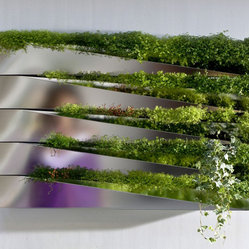 Miroir en Herbe Window Box