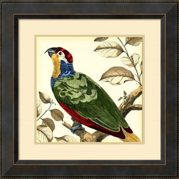 Amanti Art - Martinet 'Tropical Parrot II' Framed Art Print 23 x 23-inch - Who's a pretty bird?  This vintage styled tropical friend adds a spark of lively color and feathered charm to your wall; making a great accent piece for any room in your home or office.