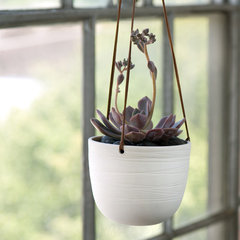 traditional indoor pots and planters by Pigeon Toe