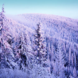 Murals Your Way - Winter Forest at Sunset, Mt. Spokane State Park Wall Art - Photographed by Charles Gurche, Winter Forest at Sunset, Mt