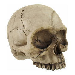 Human Skull Coin Bank - Add a unique accent to your home or office with this coin bank! Made of cold cast resin, it measures 6 1/2 inches tall, 5 1/2 inches wide, 7 1/2 inches deep, and empties via a twist off plug on the bottom. It is a neat addition to your collection of Halloween decor, and is great for party donations.
