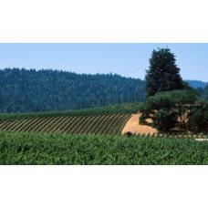 Grape Vines in a Field, Anderson Valley, Mendocino County, California, USA Wall