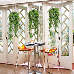 tropical  hanging plants