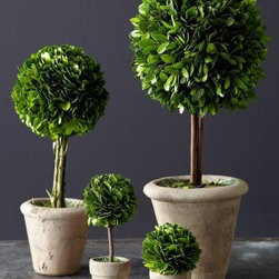 Garnet Hill - Topiary Trees - A creative take on decorative greenery, these preserved-boxwood topiary trees make a memorable table setting or mantel decor. Displayed in a rustic ceramic pot. For indoor use only.