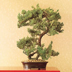 Preserved Juniper Bonsai - Hang a few chinoiserie ornaments from a bonsai tree as an alternative to putting up a traditional tree.
