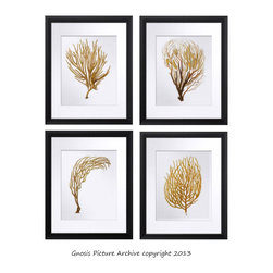 Set of 4 Sea Coral Antique Natural History Reproduction Prints - Visit Gnosis Picture Archive Etsy Shop: