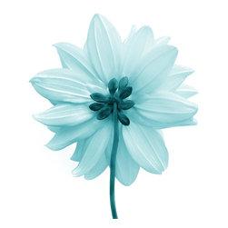 """""""Blue Square"""" Artwork - Macro Photograph of light blue flower on white"""