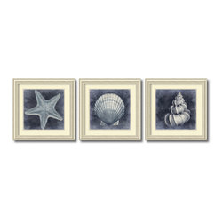 Amanti Art - Caroline Kelly 'Ocean Blue- set of 3' Framed Art Print 29 x 29-inch Each - The seashell photography of Caroline Kelly depicts an adoration for the patterns and designs crafted by mother nature herself; share your appreciation for these seaside treasures by adding this framed artwork set to your decor.