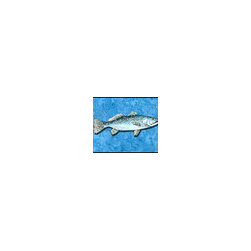 Caroline's Treasures - Fish - Trout Indoor or Outdoor Mat 24 x 36 Doormat - Indoor / Outdoor Mat 24 x 36 - 24 inches by 36 inches. Permanently dyed and fade resistant. Great for the front door or the back door. Use this mat inside or outside. Use a garden hose or power washer to chase the dirt off of the mat. Do not scrub with a brush. Use the Vacuum on floor setting. Made in the USA. Clean stain with a cleaner that does not produce suds.