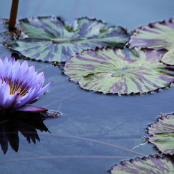 PrintedArt - Purple Water Lily - Print is made with archival pigment inks for best color saturation and contrast with a 75-year guarantee against fading or discoloring. Mounted on light-weight but rigid aluminum dibond board to create a float-on-the-wall piece of art. Also available face-mounted with acrylic.