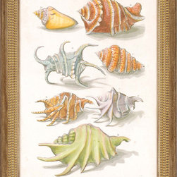 Paragon Decor - Conch Shell Illustre Artwork - Brilliant conch shells are richly apportioned in a antique gold frame with beaded face.