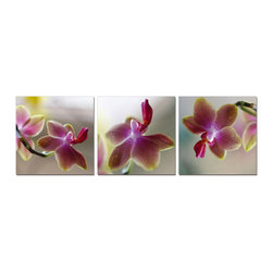 Tropical Orchids 3 Piece Photo, 20x60 - Artcorner offers affordable three-panel wall art for any type of interior wall space. We design each of our wall pieces by mounting beautiful hi-resolution images to high-quality, solid-wood panels. Our decorative wall-art sets are available in three different sizes and can be hung in commercial and office spaces as well as any area of the home. Panels are designed for durability and moisture resistance. Any piece can hang in bathrooms and kitchens without being damaged by heat and moisture.