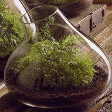 Eclectic Indoor Pots And Planters Bubble Terrarium