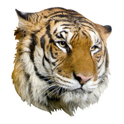 "Walls Need Love - Tiger Mount Decal - ""Here, kitty, kitty!"" You can safely call over to this fiercely detailed decal. It showcases the stunning swirl of a tiger's fur, its snow-white whiskers and pale pink nose."
