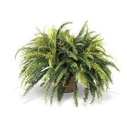 New Growth Designs - Lush Fern Plant - If you're the type of person who can't keep a plant alive, but you desperately want to fill your home with greenery, here's your solution. This realistic-looking artificial fern sits in a classy terra cotta planter. No one will ever guess you're not a green thumb.