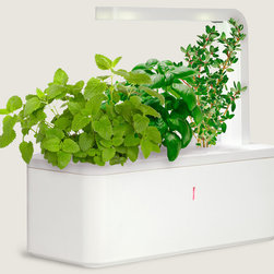 Smart Herb Garden - The younger sibling of the Click & Grow, this is almost eerily prescient, always one step ahead of you. This newer version comes equipped with a grow light, and like the original, it has a refillable water reservoir and a plant cartridge with seeds and a super-vitamin for soil. Tucked inside the pot are electronic sensors and software that measure the plant's needs, releasing precise amounts of fertilizer, air and water.