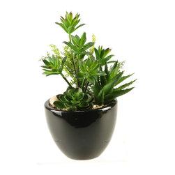 D&W Silks - D&W Silks Mini Dracaena, Aloe And Echeveria In Round Ceramic Planter - Mini dracaena, aloe and echeveria in round ceramic planter