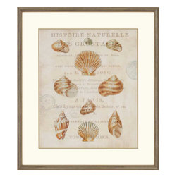 Paragon - Shell Collection II - Framed Art - Each product is custom made upon order so there might be small variations from the picture displayed. No two pieces are exactly alike.