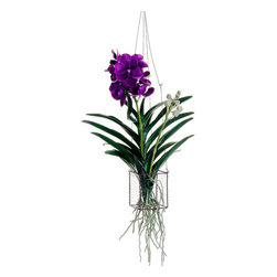 Silk Plants Direct - Silk Plants Direct Vanda Orchid Hanging Plant (Pack of 1) - Pack of 1. Silk Plants Direct specializes in manufacturing, design and supply of the most life-like, premium quality artificial plants, trees, flowers, arrangements, topiaries and containers for home, office and commercial use. Our Vanda Orchid Hanging Plant includes the following: