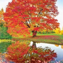 Maple Reflections Puzzle - 1000 Piece Jigsaw PuzzleMaple Reflections is a stunning, new landscape puzzle for the fall. The beautiful orange and red leaves are complimented by the green grass and cloudless blue sky. This is the perfect puzzle for relaxing at home during the fall, and for anyone who loves the challenge of working nature puzzles.