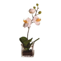 Small Orchid in Square Vase with Artificial Soil - About VickermanThis product is proudly made by Vickerman, a leader in high quality holiday decor. Founded in 1940, the Vickerman Company has established itself as an innovative company dedicated to exceeding the expectations of their customers. With a wide variety of remarkably realistic looking foliage, greenery and beautiful trees, Vickerman is a name you can trust for helping you create beloved holiday memories year after year.