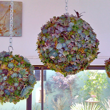 Succulent Orb Forms - Use this orb form to create a plant masterpiece to hang from the ceiling or in your patio. The form is made from sphagnum moss and has a metal hook attached. Fill it with your succulent cuttings or other low-water plants for a neat, unique piece of garden art.