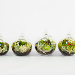 """Miniature Terrariums - 3"""" miniature hand blown glass terrariums with miniature succulents and tiny scenes. Custom orders welcome."""