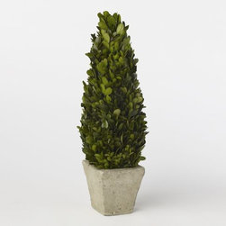 Boxwood Tree - I love a holiday decoration that doesn't have to be wrapped up and stored in the attic, only to be untangled from a mess of holiday lights the following year. This live tree makes a great centerpiece and can be moved outside onto the front steps or planted in the yard later.