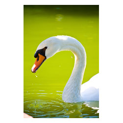 Custom Photo Factory - Portrait of Mute Swan Outdoors Canvas Wall Art - Portrait of Mute Swan Outdoors  Size: 20 Inches x 30 Inches . Ready to Hang on 1.5 Inch Thick Wooden Frame. 30 Day Money Back Guarantee. Made in America-Los Angeles, CA. High Quality, Archival Museum Grade Canvas. Will last 150 Plus Years Without Fading. High quality canvas art print using archival inks and museum grade canvas. Archival quality canvas print will last over 150 years without fading. Canvas reproduction comes in different sizes. Gallery-wrapped style: the entire print is wrapped around 1.5 inch thick wooden frame. We use the highest quality pine wood available. By purchasing this canvas art photo, you agree it's for personal use only and it's not for republication, re-transmission, reproduction or other use.