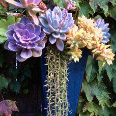 Contemporary Outdoor Pots And Planters by CARL BALTON & ASSOCIATES