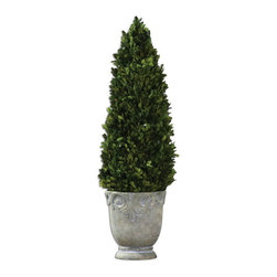 Uttermost - Uttermost 60111  Boxwood Cone Topiary - Preserved, natural evergreen foliage potted in a light stone finished, ceramic planter.