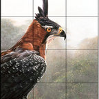 The Tile Mural Store (USA) - Tile Mural - Ornate Hawk Eagle Portrait - Kitchen Backsplash Ideas - This beautiful artwork by Alan Hunt has been digitally reproduced for tiles and depicts a closeup of an Ornate Hawk Eagle.  Images of birds of prey on tiles are great to use as a part of your kitchen backsplash tile project or your tub and shower surround bathroom tile project. Pictures of eagles on tile and images of owls on tiles make a great kitchen backsplash idea and are excellent to use in the bathroom too for your shower tile project. Consider a tile mural of hawks and eagles for any room in your home where you want to add interest to a plain tile wall area.