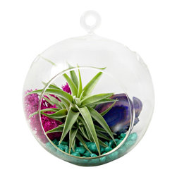 "Purple Sea Foam Air Plant Terrarium - Tillandsias or ""air plants"" are perfect low maintenance plants. They do not require soil to grow and prosper. They simply need bright, indirect light and water once or twice a week. Allow the tillandsia to fully dry prior to placing it back in it's container."