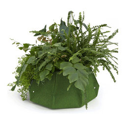 Lana Woolly Pocket Planter, Green - The Lana planter from Woolly Pocket creates a modern, finished look and adds pop of color to your home. Made from 100% recycled plastic bottles, the exterior fabric is lightweight and breathable to allow plants to aerate.